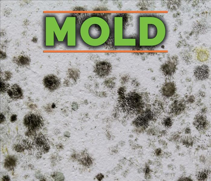 Mold Remediation Is There Mold in Your Greene County Home?