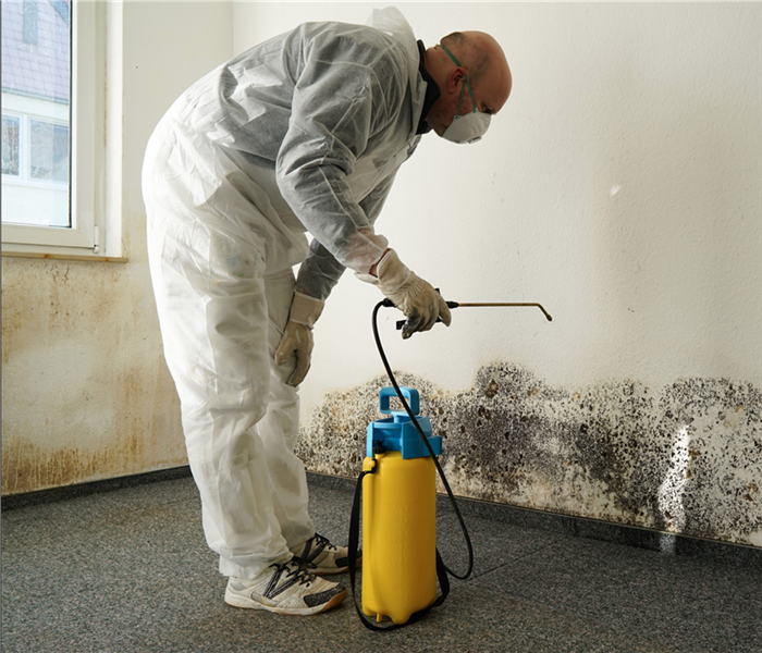 specialist in combating mold in a building