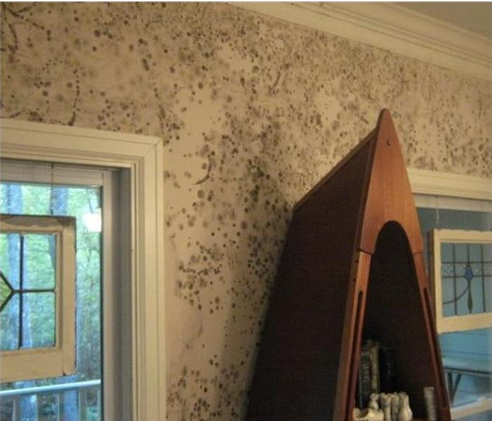 Mold Remediation Is Mold Damage Covered By Rental Insurance?
