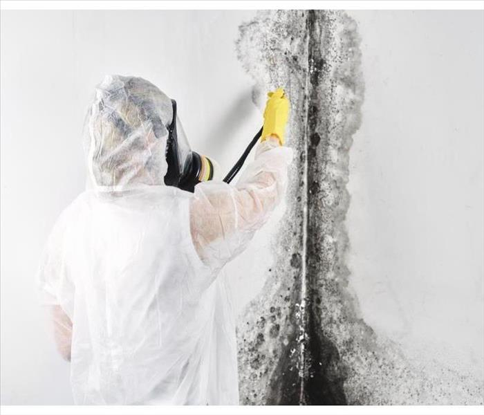 A professional disinfector in overalls processes the walls from mold. Removal of black fungus in the apartment and house. Asp